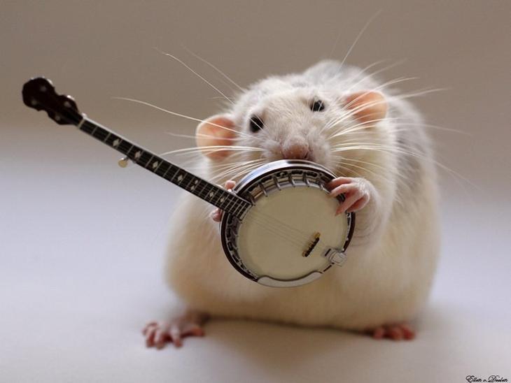 Крыса играет на банджо. Эллен ван Дилен. Фото