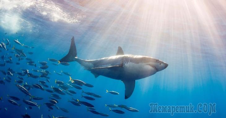 К чему снится акула в воде женщине. Сонник акула