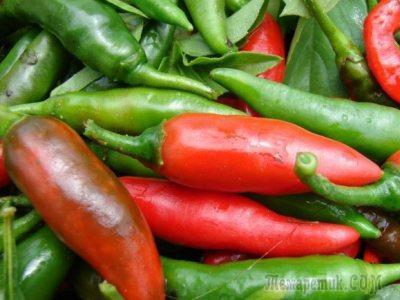 Как хранить перцы после сбора