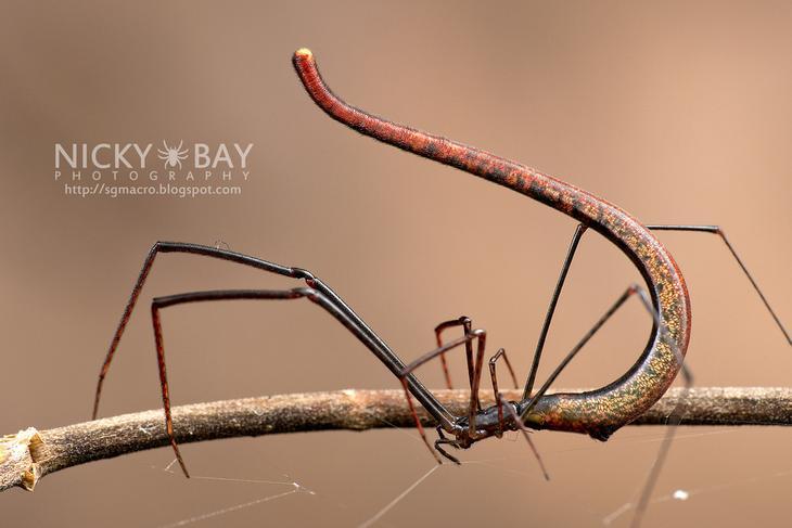 NewPix.ru - Макро фотографии необычных насекомых Сингапура от Nicky Bay