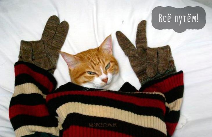 крутая кошка