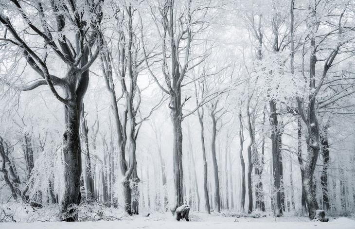 Krasota prirody Siena International Photography Awards 9