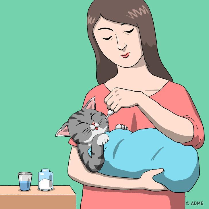 Правила первой помощи домашнему питомцу, которые важно знать каждому хозяину