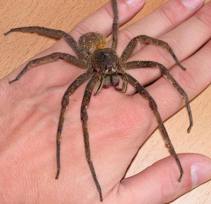 опасные насекомые, самые опасные насекомые планеты