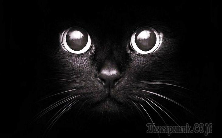 Приметы и суеверия о кошках