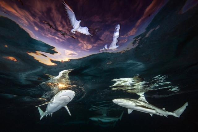 Победители конкурса на лучшего подводного фотографа 2021 года