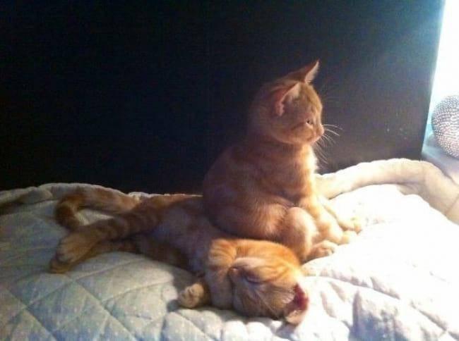 15 забавных снимков, отображающих суть котов