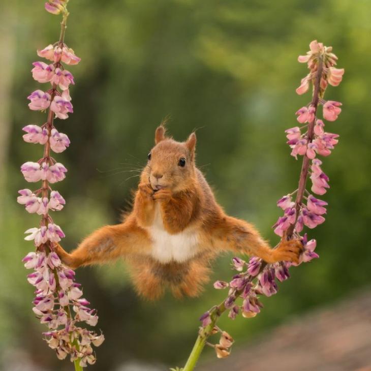 Самые смешные фотографии дикой природы 2018, Comedy Wildlife Photo Awards