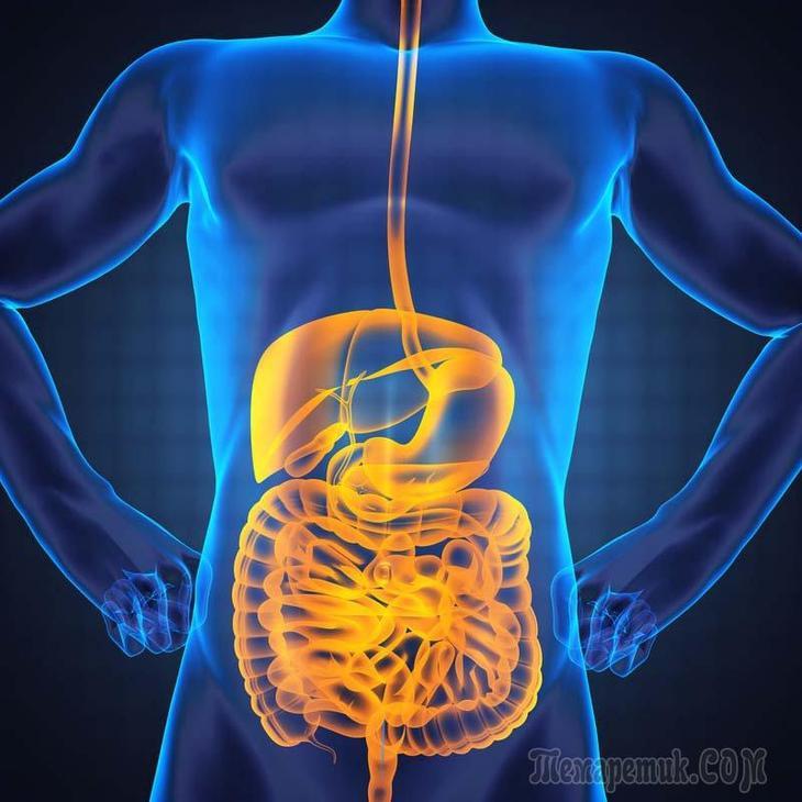 Препарат восстановить жкт и похудеть