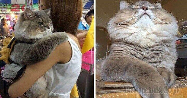 Он самый популярный кот в Таиланде. Знакомьтесь — Бон-Бон