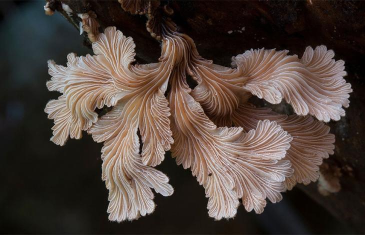 экзотические грибы, необычные грибы