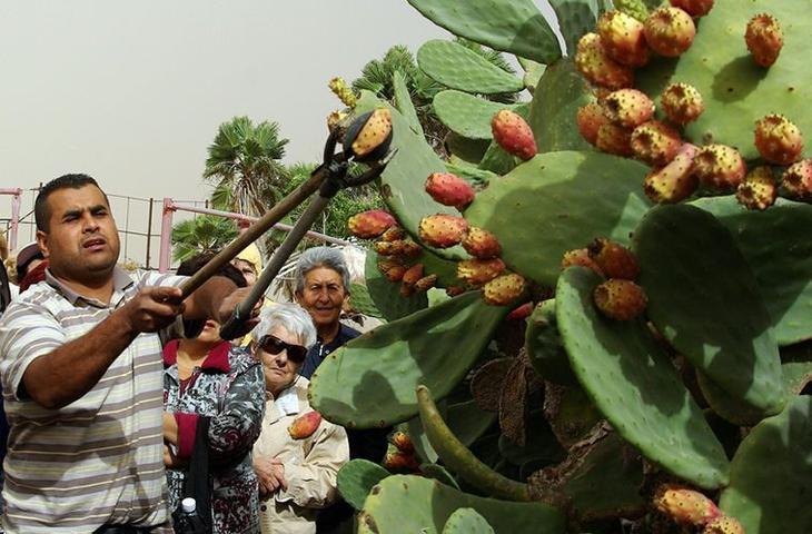 Диковинные традиции тунисцев