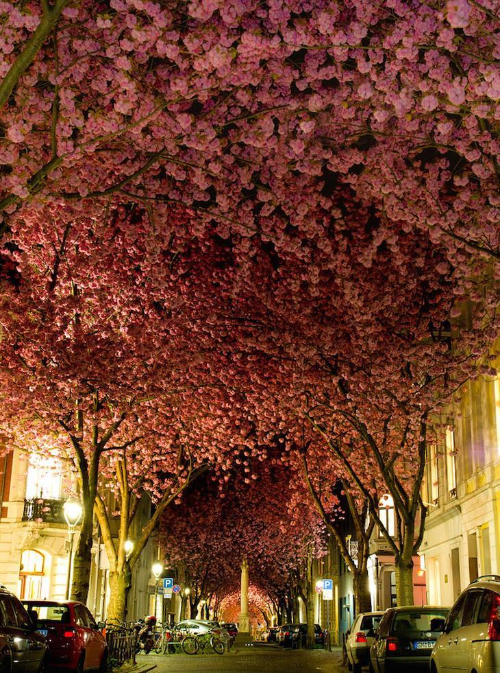 Германия, удивительная улица в Бонне