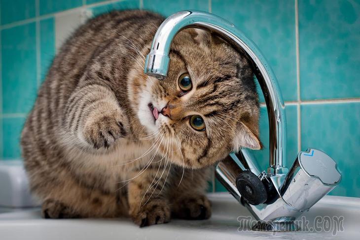 Кошка — домашнее чудо!