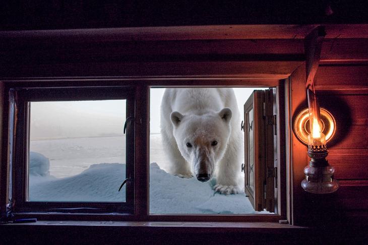 Белый медведь loverme