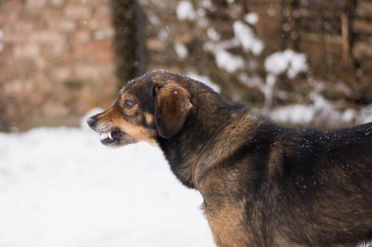 Почему нельзя убегать от стаи собак