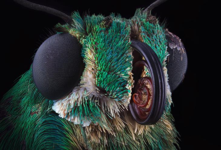 Зеленая недобабочка из Доминиканы