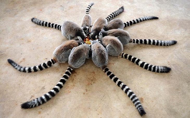 luchshee foto zhivotnyh s 26 yanvarya 9 Лучшие фотографии животных со всего мира за неделю