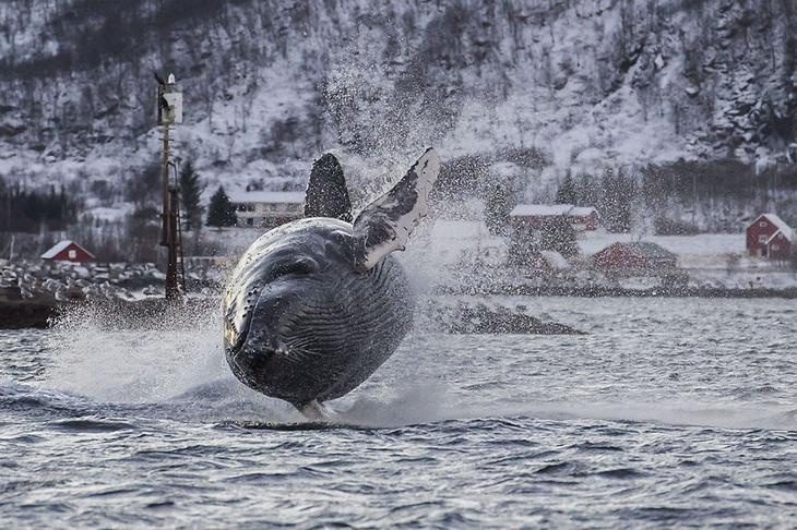 fotografii kitov 18