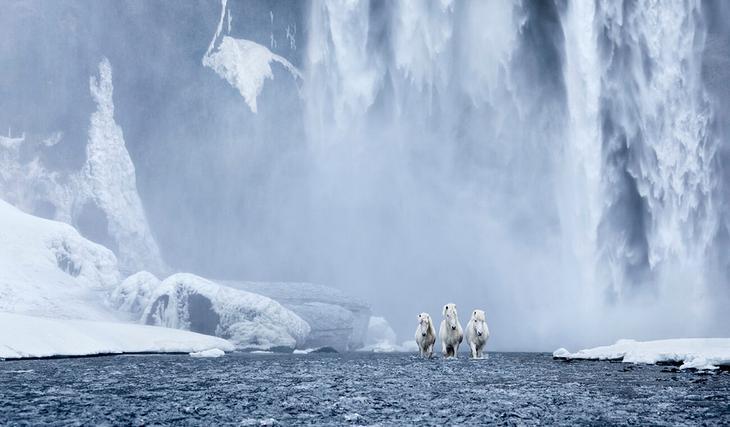 loshadi-Islandii-fotograf-Dryu-Doggett 1