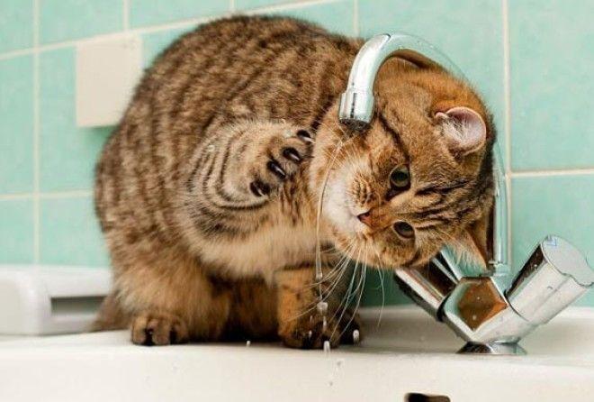 50 GIF-доказательств, что коты — чертовски весёлые ребята