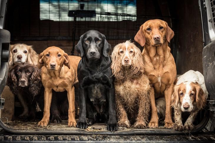 Победители фотоконкурса Dog Photographer of the Year 2018 3