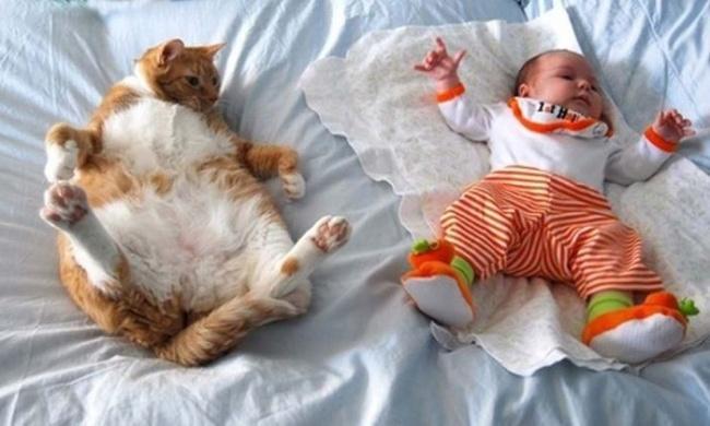 Коты, которые действительно любят детей