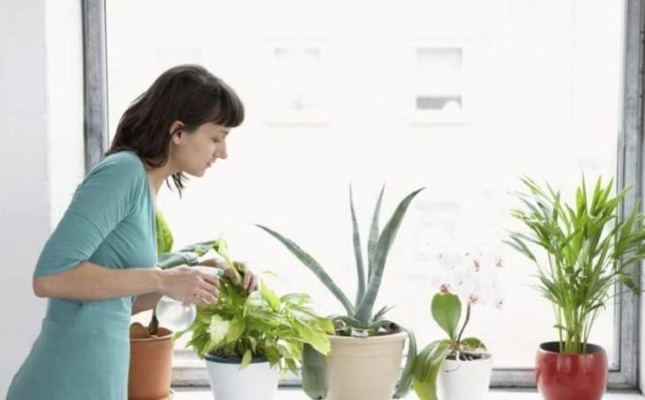 Перекись водорода для комнатных цветов: дозировка и применение