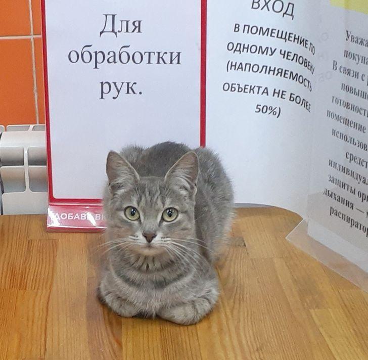 Коты, которым хорошо даже без коробки и лежанки