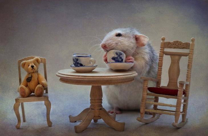 Красивое чаепитие с крысой в главной роли. Фото