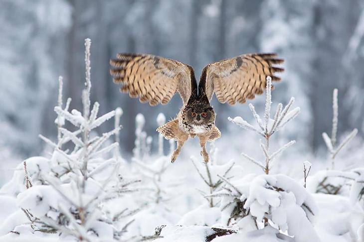 NewPix.ru - Красивые фотографии сов