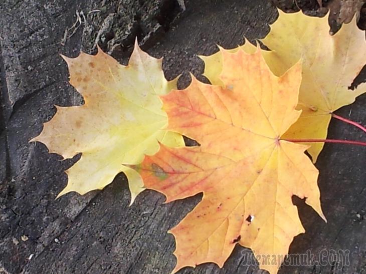 Осенний лист (Стих)
