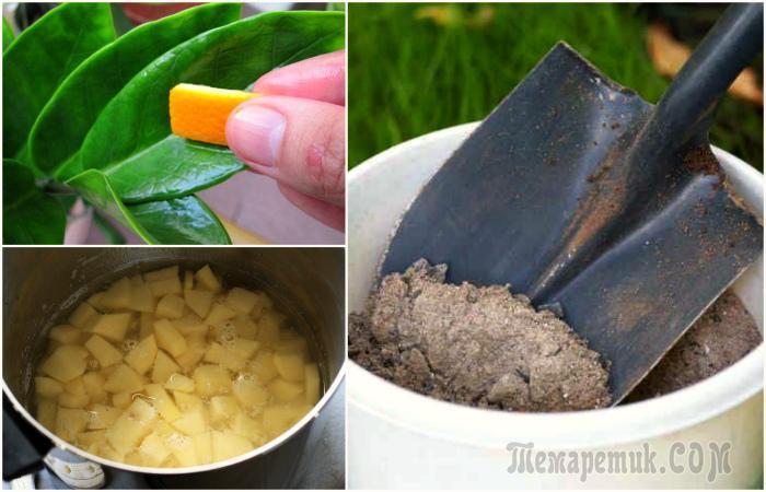 Эффективные удобрения для комнатных и садовых растений, которые есть дома у каждого