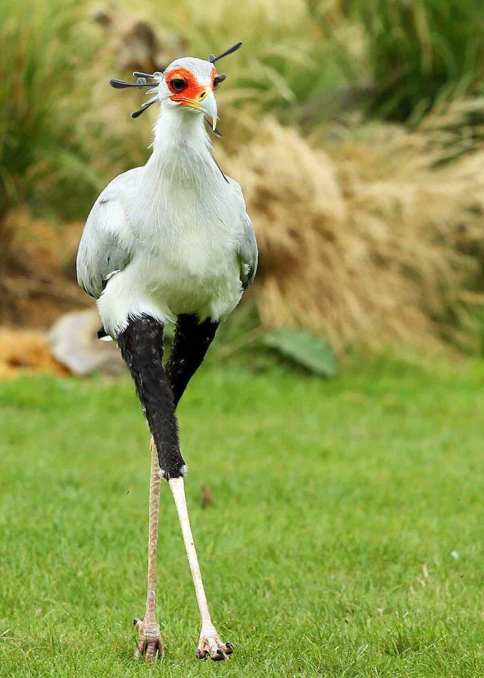 20 необычайно красивых и удивительных птиц, о которых вы, возможно, даже не слышали