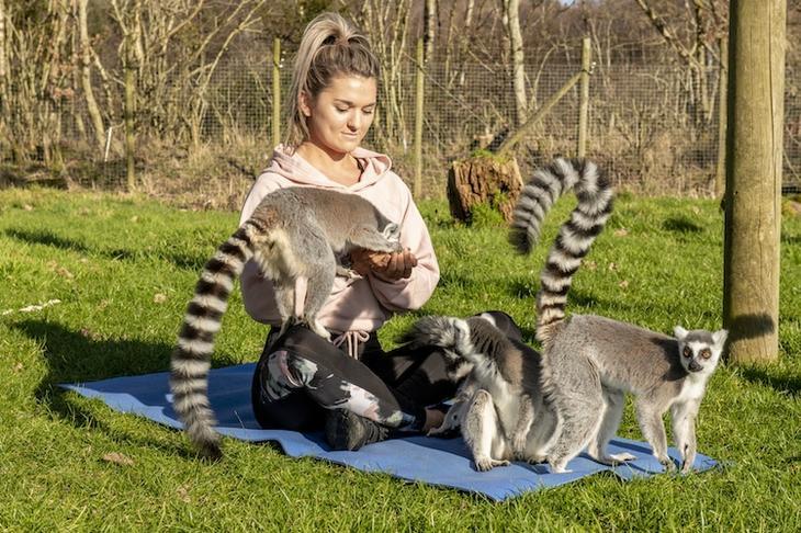 «Узбагойся!»: занятия йогой с лемурами избавляют от стресса и плохого настроения вместе, «лемогой», йогой, предлагает, забыть, дикой, природы, Озерного, зарядиться, Hall», которые, отель, лемуры, духовные, помогают, животными, «Armathwaite, человек, плата, всеми