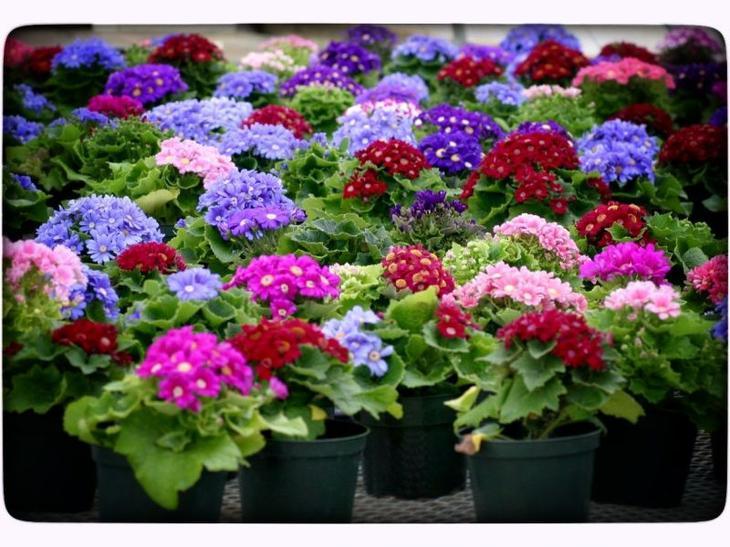 Рассада цветов в феврале и марте что сажать