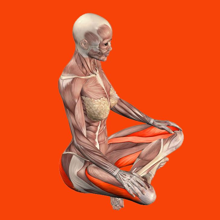 Мышцы на внутренней стороне бедра