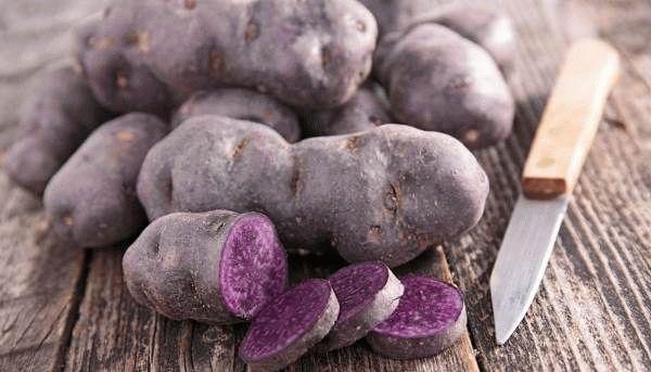 Описание сортов фиолетовой картошки ее полезные свойства