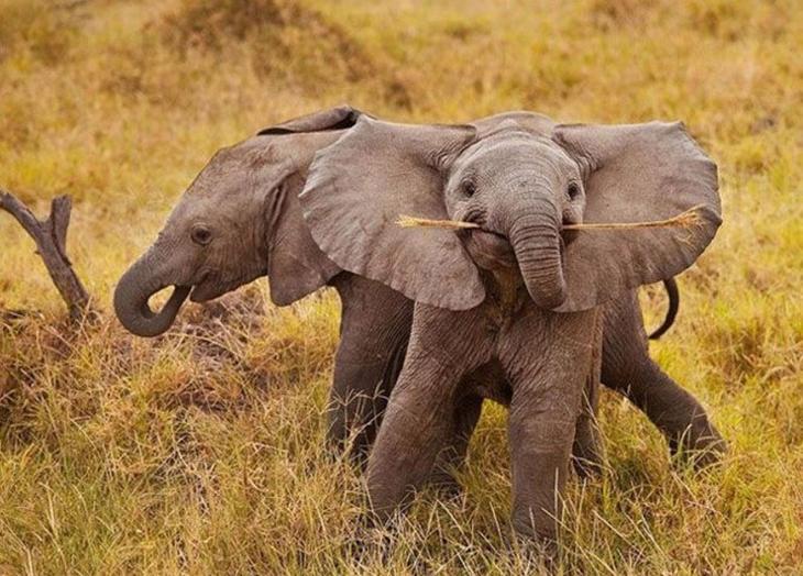 70 очаровательных слонят, которые подарят вам улыбку животные, слоненок, фотография