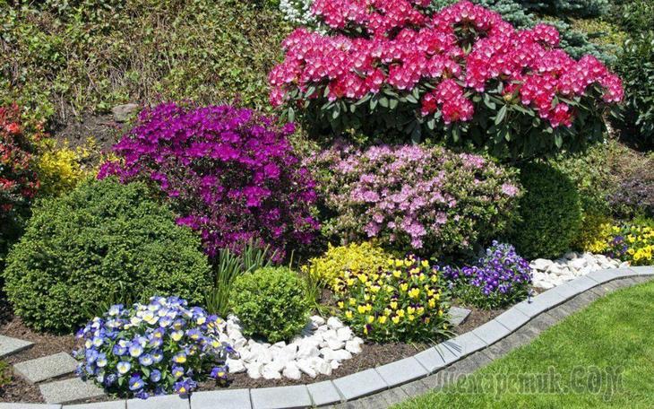 Основные принципы формирования цветников непрерывного цветения, за которыми легко ухаживать