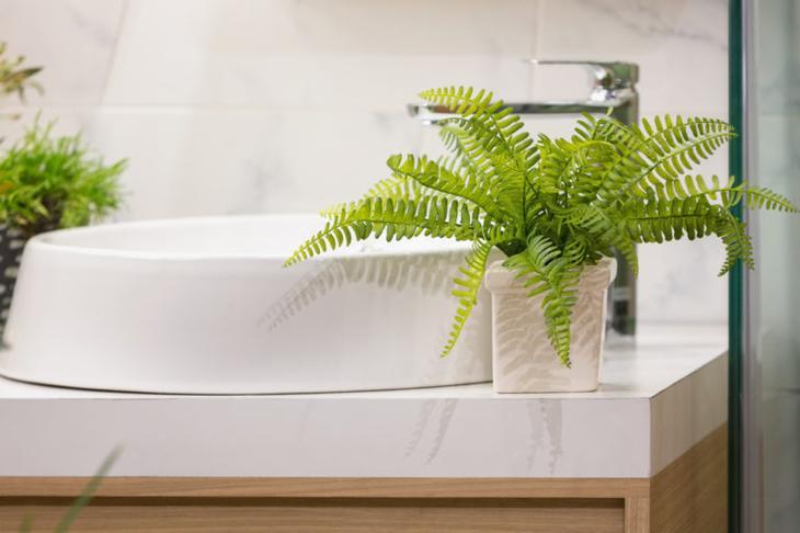 папоротник для ванной комнаты