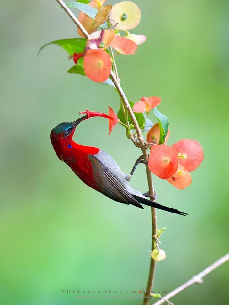NewPix.ru - Потрясающие фотографии птиц от Mommam Tripleseven