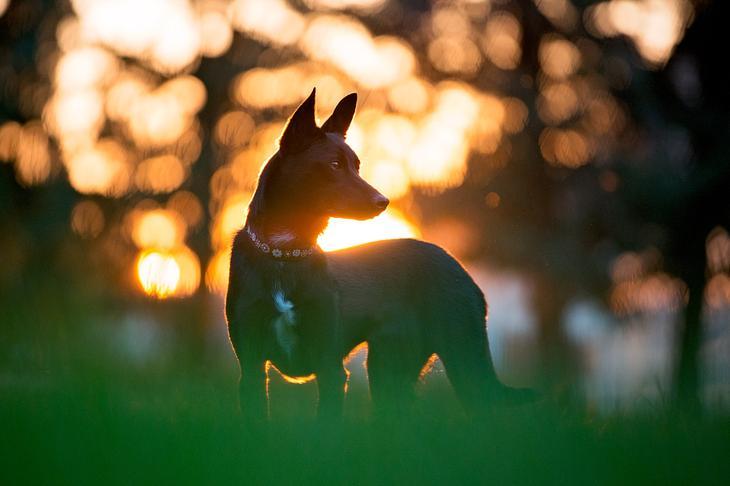 Фотографии собак - 12