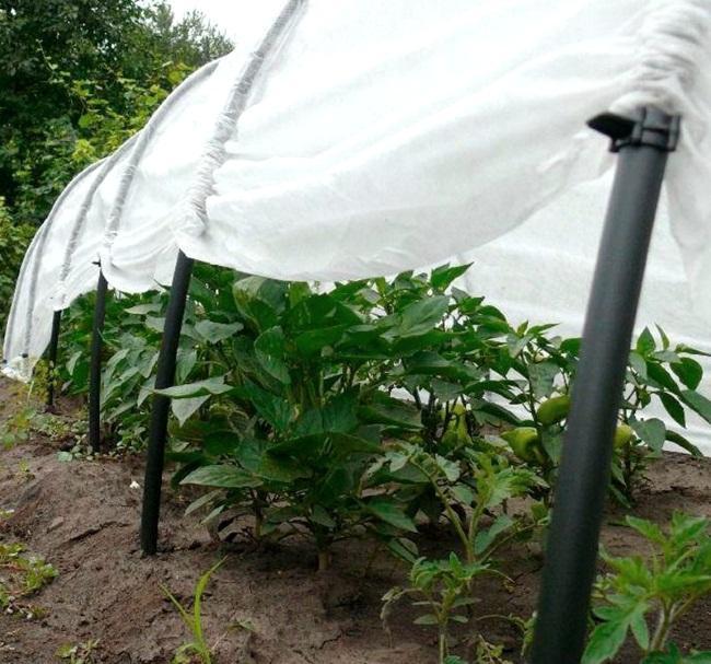 Укрывной материал от сорняков как выбрать для грядок Способы использования укрывного материала от травы