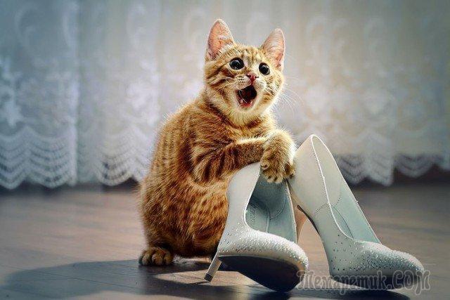 Тридцать причин обменять жену на кошку