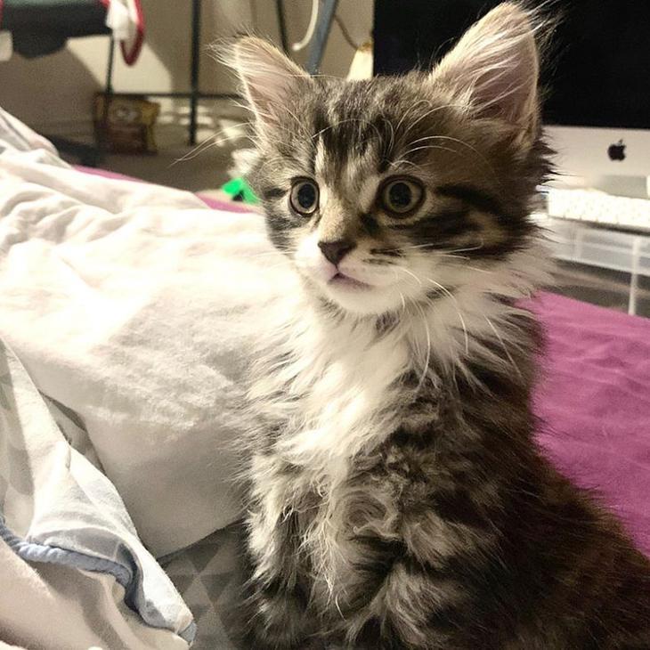 20 кошачьих полукровок, вызывающие зависть даже у их чистокровных родителей