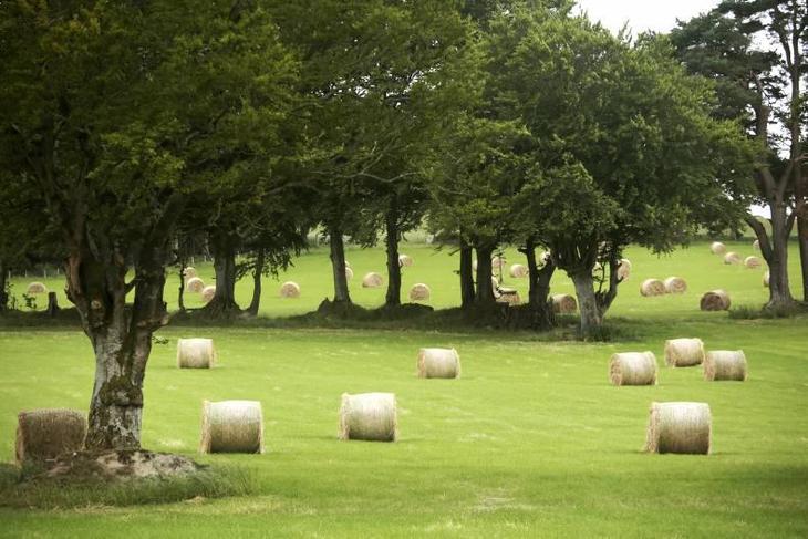 Можно ли отдать в аренду землю сельхозназначения