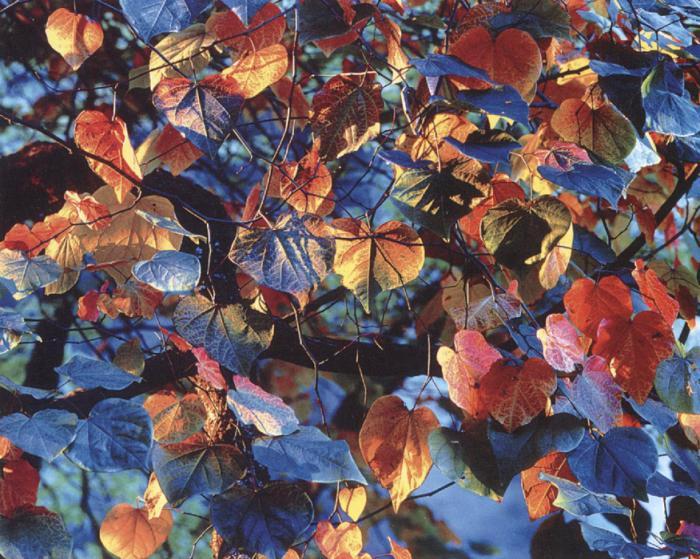 Природа глазами фотографа: нереально реальные работы Кристофера Беркетта