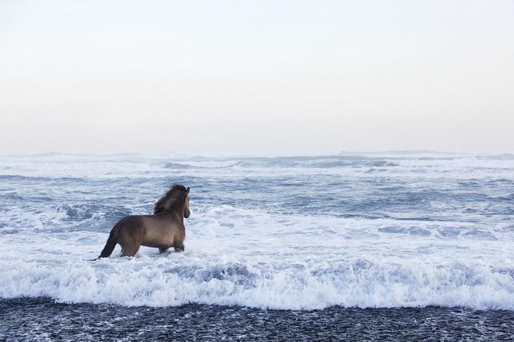 loshadi-Islandii-fotograf-Dryu-Doggett 3