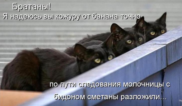 Забавные коты
